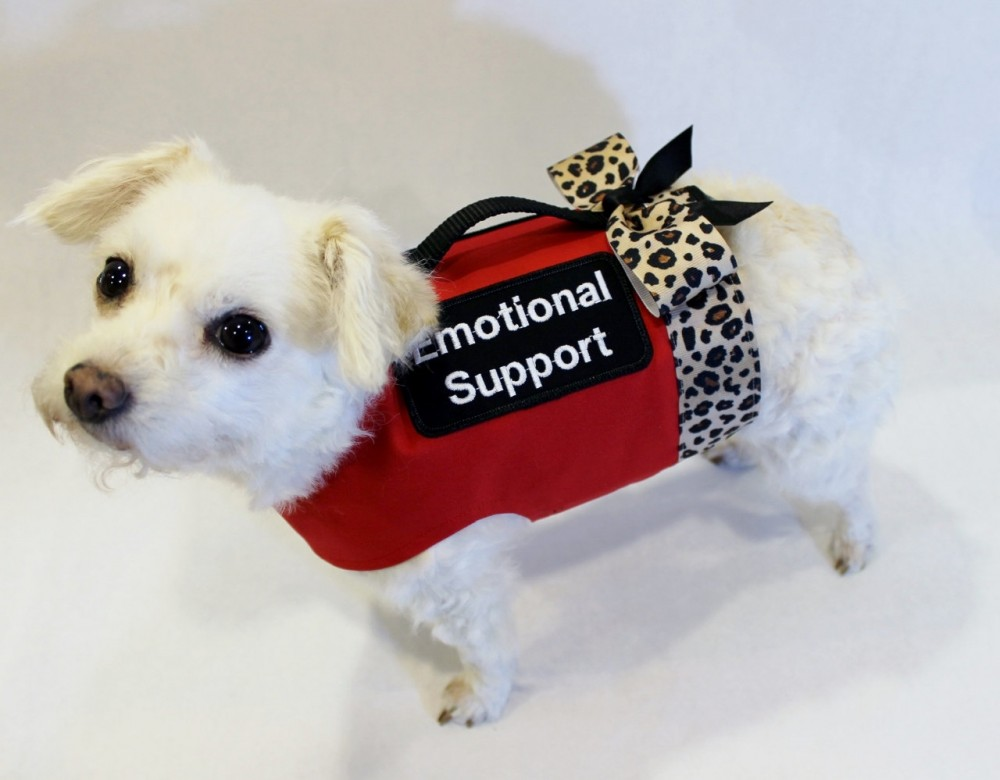 Emotional Support Animal To Suit