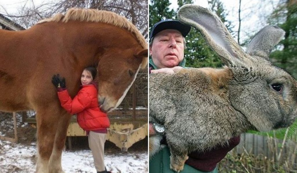 Giant Animals That Look Photoshopped, But Actually Exist